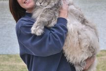 Maine Coon Cats / Maine coon love / by Darla TheNeedleNerd