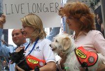 Adopt A Dog / by Barbara Fink