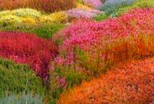 NATUREZA / Deslumbrante, surpreendente, generosa, delicada... merece respeito / by Gláucia Wataya