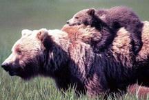 Momma Bear / by Katie Taylor