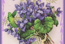baby violette / by Jen White