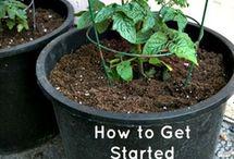 Gardening Tips / Help me make things grow / by Denise Yun