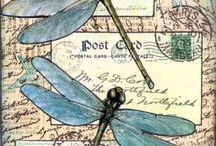 The glorious dragonfly :):) / by Jeannie Daenzer