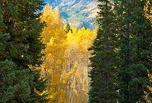 Beautiful Colorado / by Jill Wells
