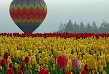 Hot Air Balloons / by Dawn Giacabazi