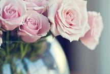 roses / by Yasuko Malhotra