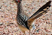 Roadrunners / by Eve Hogue