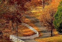 Autumn / by Barbara Busch