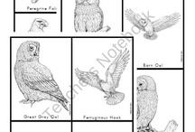 bird of Prey / by Cindy Arnold