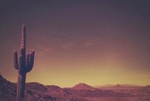 cactus / by Brittany Huckaby