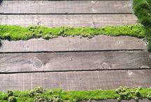 Gardening Ideas / by Lisa Mendicino