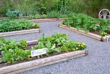 Garden ideas / by Hannah Liversidge