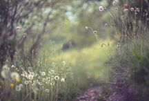 Meadow fairy tale... / Meadows to rest your eyes and soul on... / by Danica