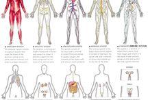 Anatomy  / by Stacie Van Lerberg Brown