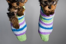Cute puppies , kittens all cute animals / by Nelly Noah