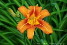 My Flowers / by Jaime Matthews