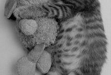 Animals. / by Caitie G.
