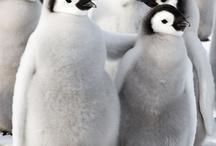 penguins <3 / by Kelly Hendricks