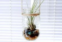 Airplants / by oui