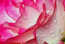 Flowers / by Dulce Calixto