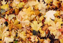 EXPLORE   Autumn  / by Earthbound Farm