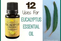 Health: Essential oil Eucalyptus / by Natural & Frugal: Raising 6 kids - Cheree