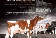 Promotions / by HolsteinWorld DairyBusiness