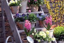Garden Ideas / Gardening / by Kelly Nottestad