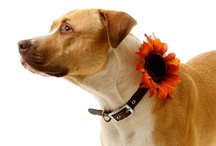 Pet Wedding Products / by Tailored