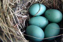 Nest Eggs / by April Walker Nunn