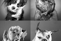 Animals / by Amanda Garrett