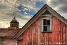 Rural Living / by Teresa Johnson