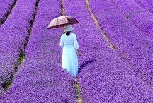 Purple / by Lindly Haunani