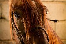Horses...my favorite animal / by Deborah Volpe