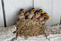 Birds / by Debra Slack
