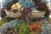 Garden Ideas / by Toni Quigley