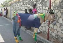 Jamaican Humour / by My-Island-Jamaica.com