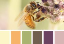 Nice Color combinations / by Colleen Bakke