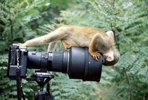 Humorous photos from around the world / by ElderTreks