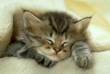 J'aime les chats / Je vis avec une dizaine de chats autour de moi, alors quoi de plus normal qu'un board special chats. Enjoy ☼ Eric, http://eric-lequien-esposti.com / by Eric Lequien Esposti