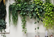 Garden Ideas / by Southern Living Plant Collection