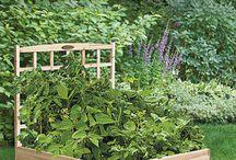 Someday a garden / by Erin Whitman