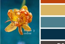 Color Pallets / by Joanna Michael