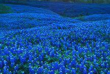 Texans Love Texas / by Alycia Johnston