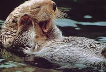 Otter! / by Heather Archuletta
