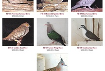 Pigeons / by Foy's Pigeon Supplies
