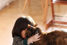 cat lady / I want to hug them all... / by Catherine T