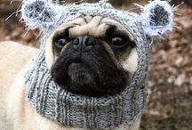 Pug Love / by Laurie Lyons