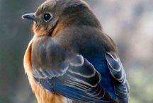 Birds / by Deryl Turner Vallett