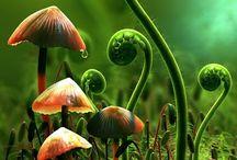 Mushrooms / by tdkateomr